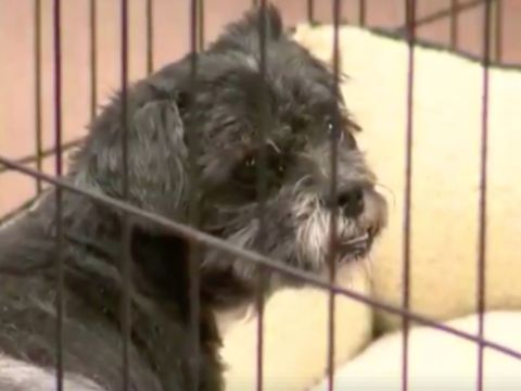 Neglected dog's leg fell off during grooming after owner surrender