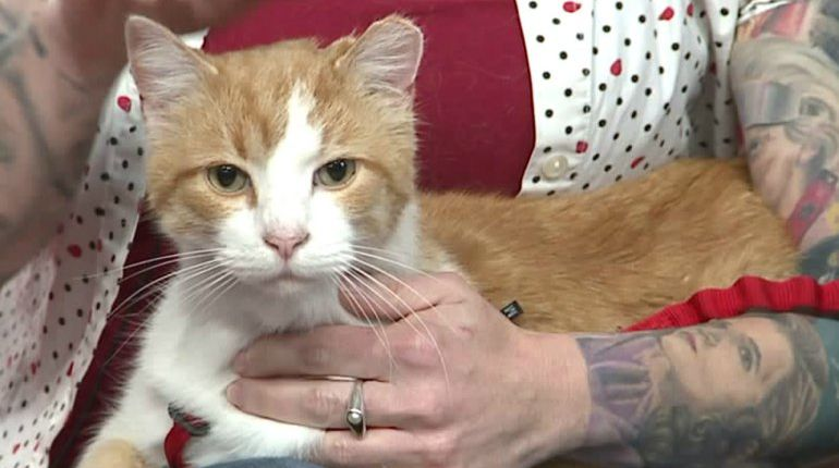 Pirate Cat hires lawyer, wants to change Carmel ordinance so he can get off home detention