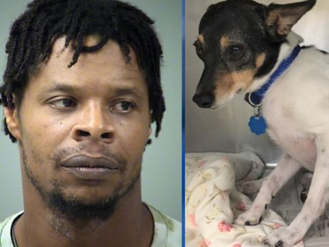 Man threw pets out window when girlfriend told him to go: police
