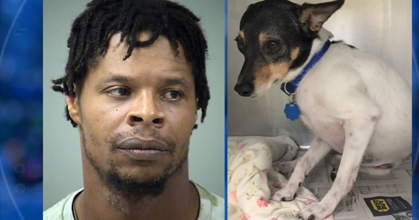 Man threw pets out second story window when girlfriend told him to leave, say police
