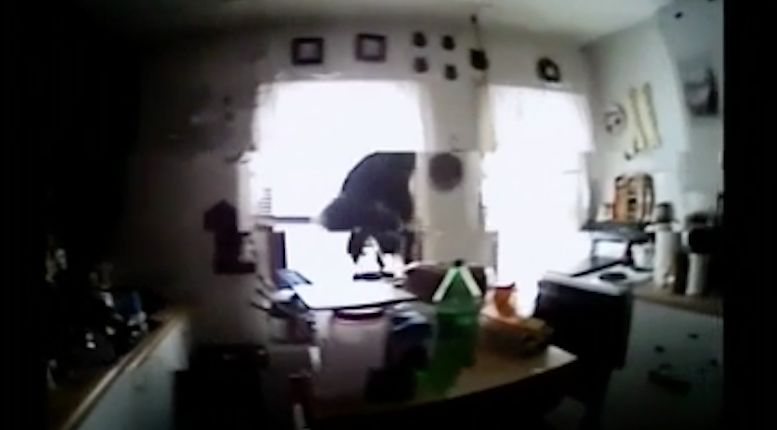 "Viral video: ""This stinking squirrel is eating my cookies'"