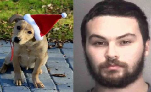 Man accused of beating girlfriend's family's newly adopted dog to death