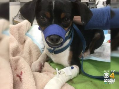 Badly injured dog may have been thrown from car