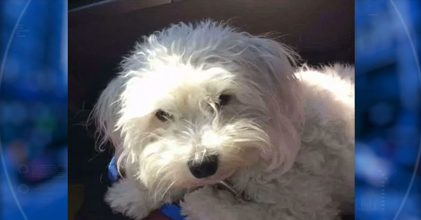 Missing dog killed after someone ties his legs, throws him onto highway