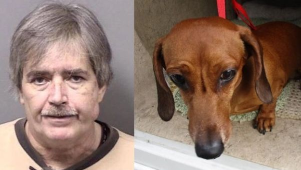 Deputies: Man used coat hanger-like tool to remove bones from dog's intestines
