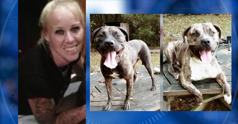 Report stops short of direct conclusion that dogs killed owner Bethany Stephens