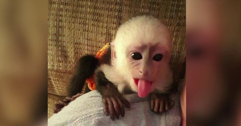Man issues warning after losing thousands during online monkey purchase