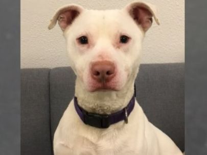 'Unadoptable' dog makes history as first deaf K-9 in state