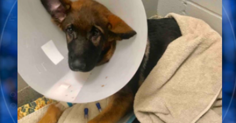 Man abused dog, lied to get donations: police