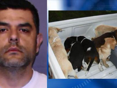 Veterinarian accused of smuggling heroin in dogs' bellies