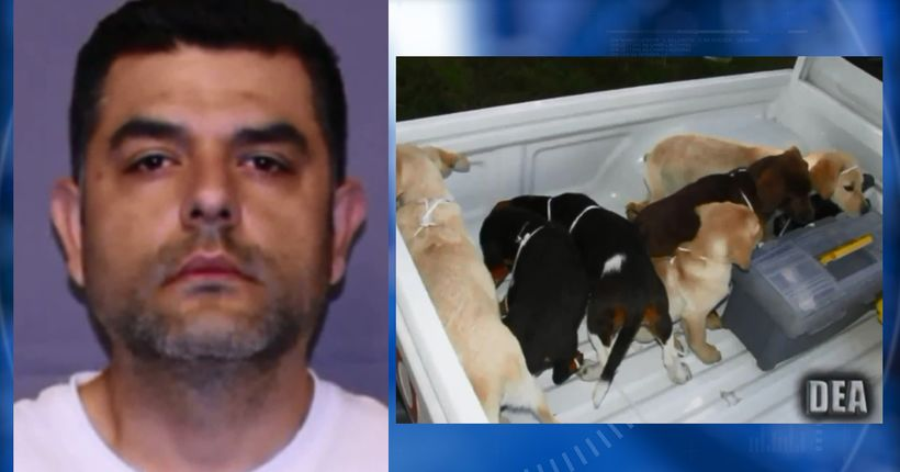 Veterinarian accused of smuggling heroin in puppies' bellies appears in court, to animal rescuers' disgust
