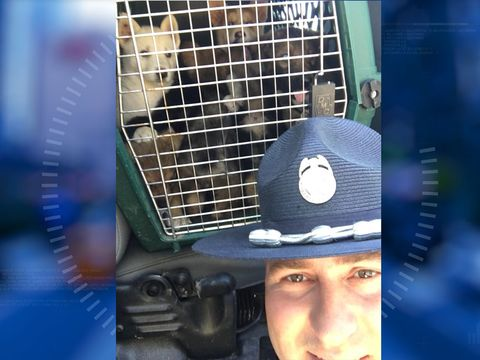Ten puppies rescued from hot trunk during traffic stop