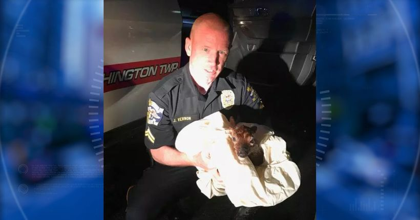Cop delivers baby deer by emergency C-section in N.J.