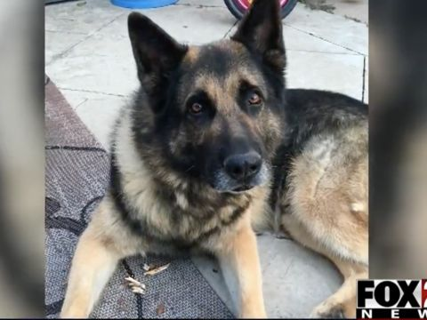 Tulsa police K9 dies from cancer