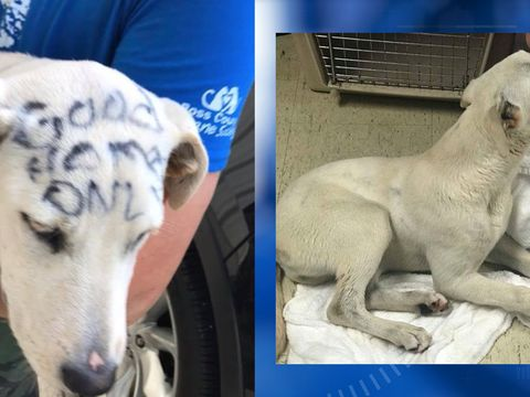 Puppy abandoned in park, covered in permanent marker