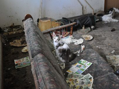 60+ cats removed from 'deplorable' conditions at Wisconsin home