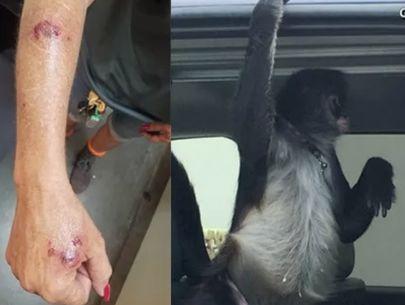 Pet spider monkey attacks Home Depot employee