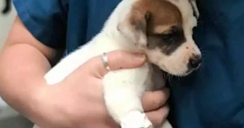 Deputies investigate after 7-week-old puppy's paw cut off