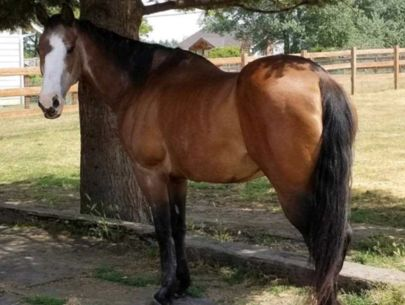 Investigation starts on whether horse's tongue was intentionally cut out