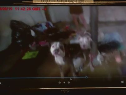 Dogs found chained to pole, eating insulation