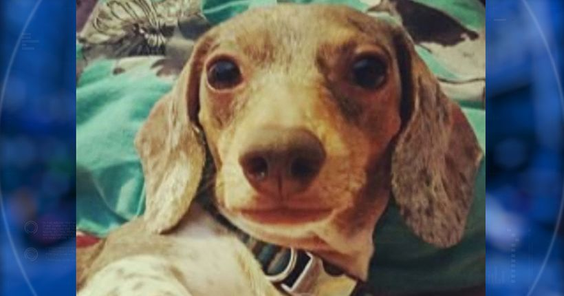 Woman distraught after her dog was killed while in care of sitter hired through Rover app