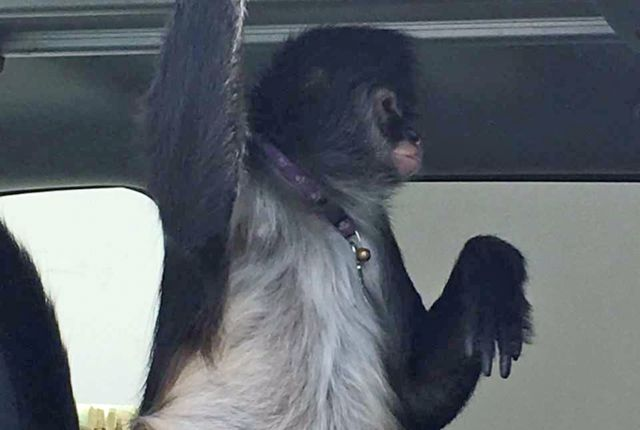 Florida monkey owner arrested in North Carolina; monkey accused of biting Home Depot worker