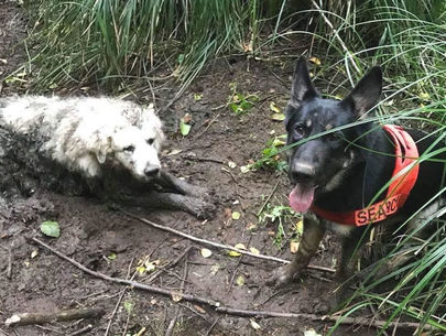 Search dog rescues lost dog trapped in mud for two days