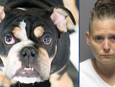 Jerod Mayo's missing bulldog found dead; dog trainer accused of hiding body