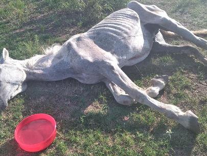 Dozens report possible livestock abuse on property near Austin