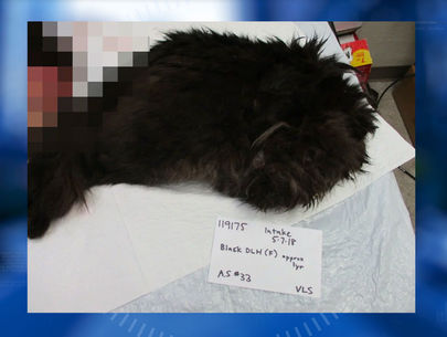 Ninth cat found mutilated in string of suspected serial attacks