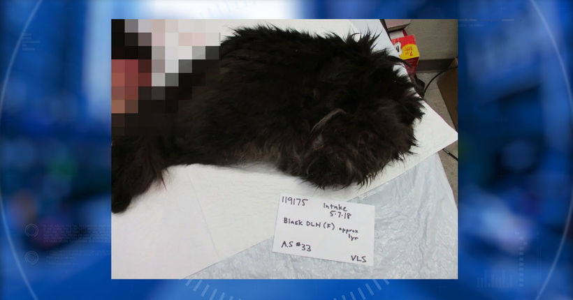 Ninth cat found mutilated in Olympia in string of suspected serial attacks